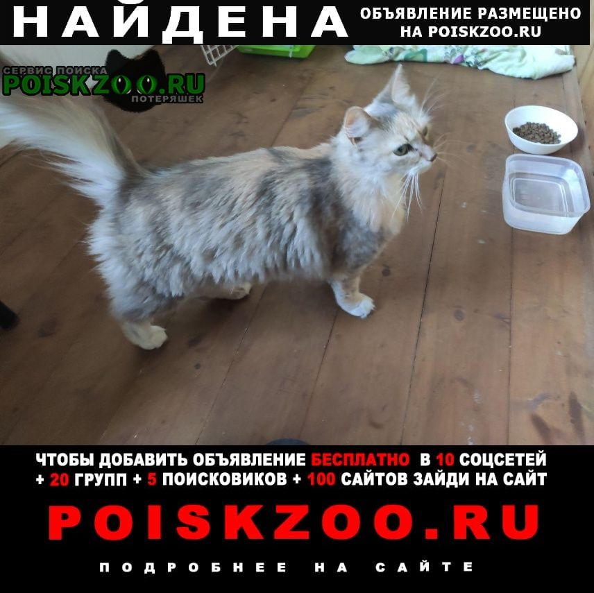 Найдена кошка тёплый стан Москва