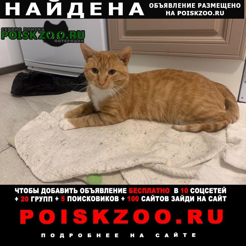 Найдена кошка рыжий кот Долгопрудный