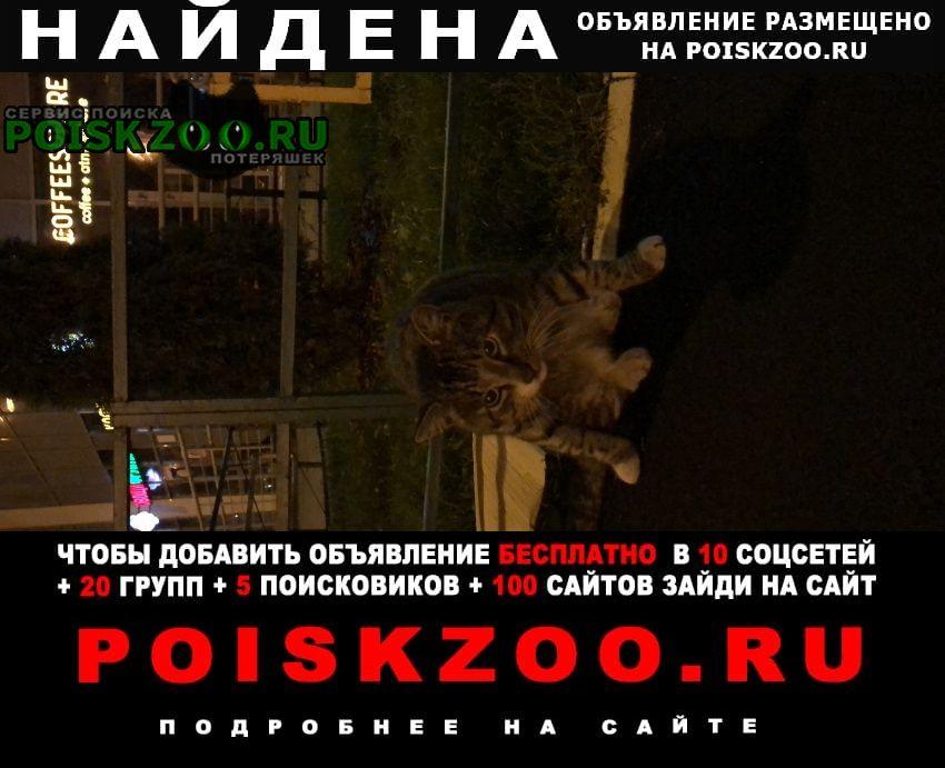 Найдена кошка 1й нагатинский проезд 11к2 Москва