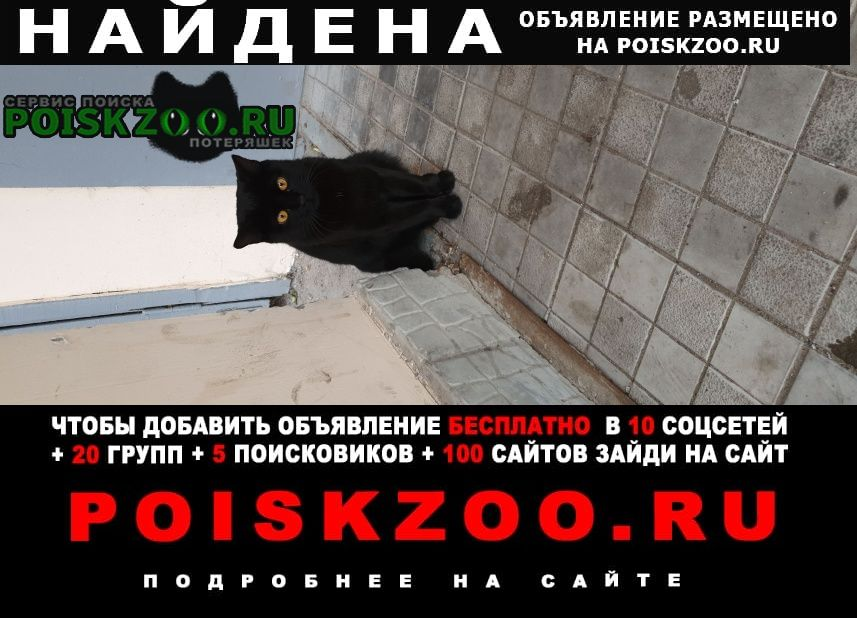 Найдена кошка кот Нижний Новгород