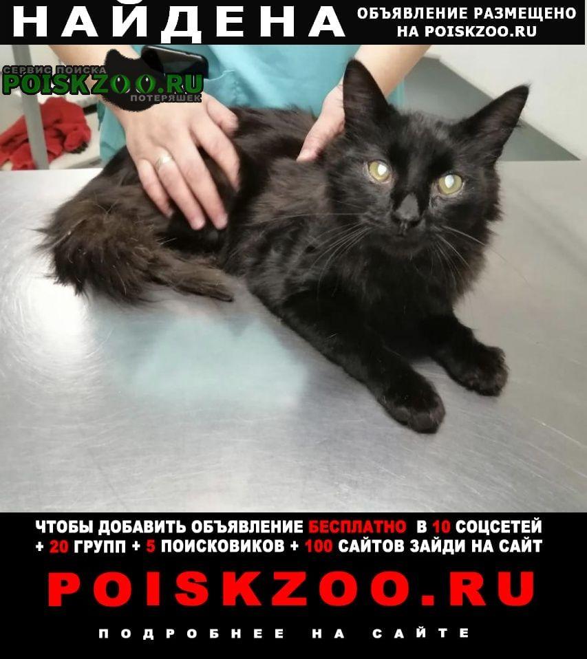 Найдена кошка отдам чудом спасённого, доброго кота Москва