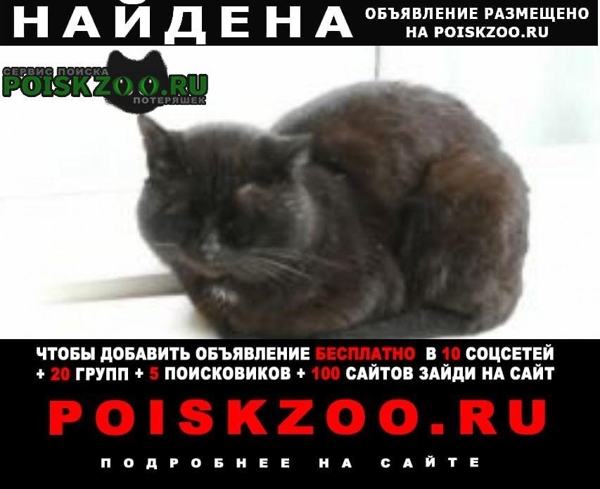 Санкт-Петербург Найдена кошка или кот черный
