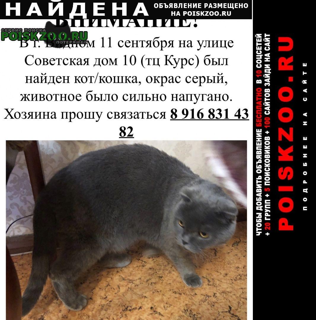 Найдена кошка 11 октября кот Видное