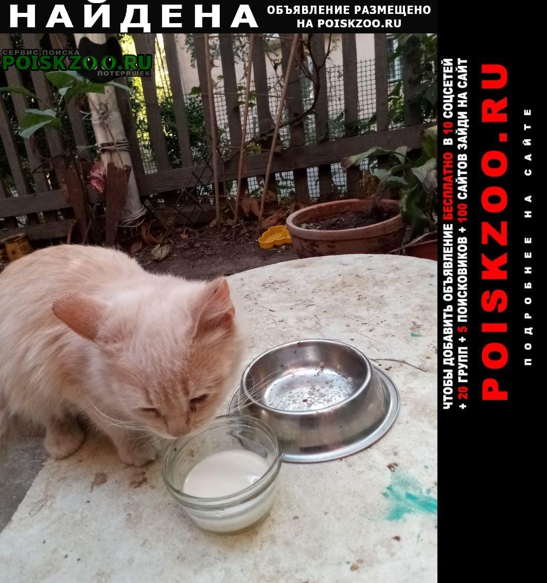 Найдена кошка котенок персикого цвета Ростов-на-Дону