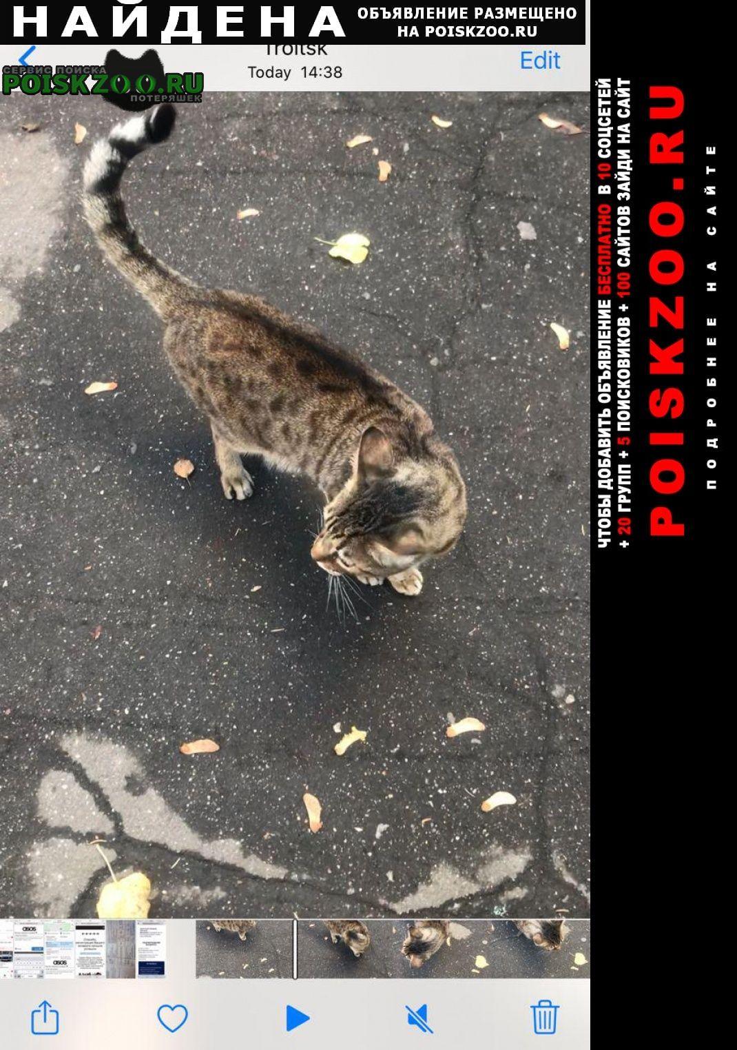 Найдена кошка крупный кот, черепаховый окрас Троицк