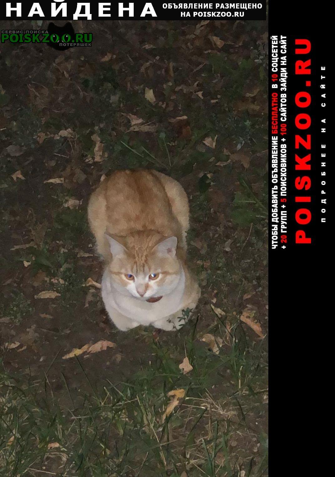 Найдена кошка рыжий с ошейником Москва
