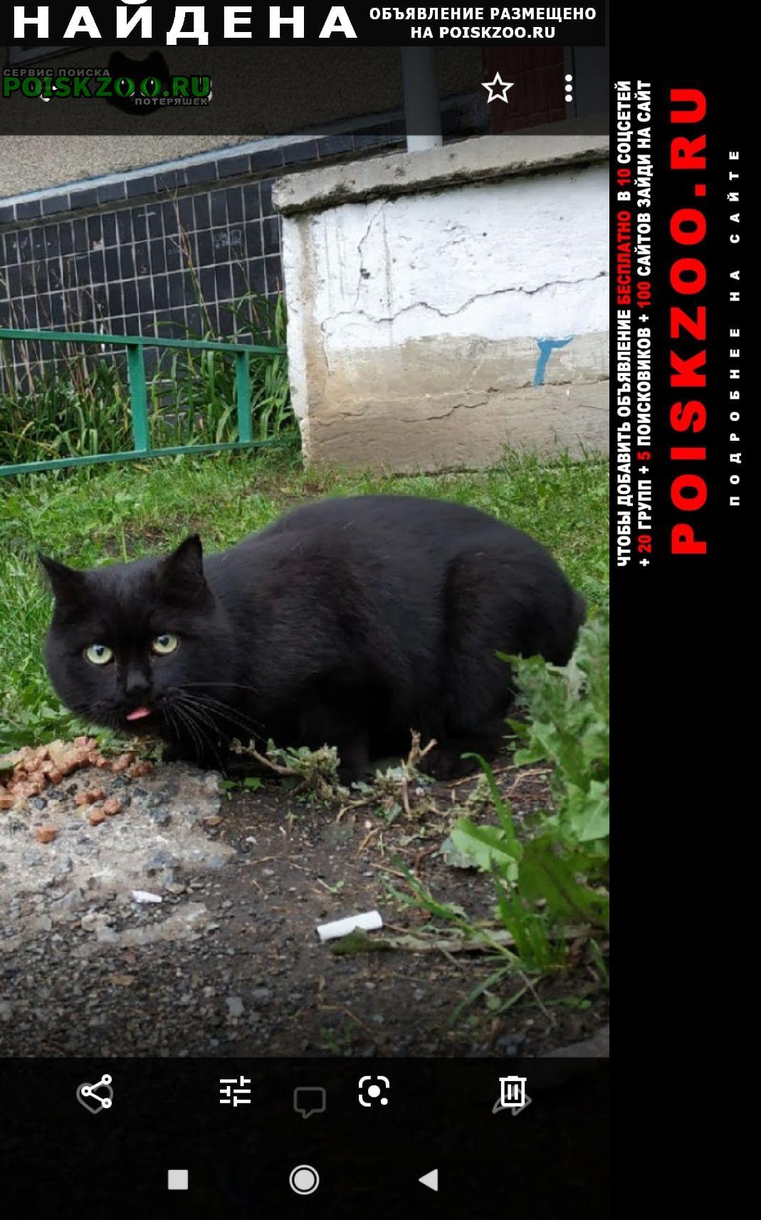 Найдена кошка северо-запад.август.район 36 школы Челябинск