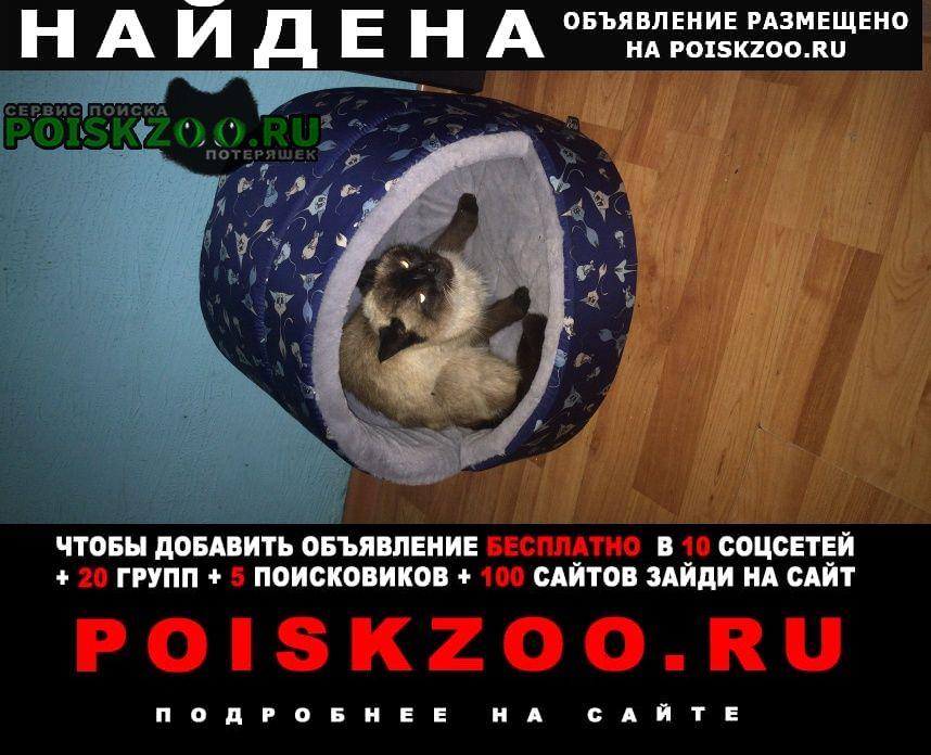 Найдена кошка сиамочка Химки