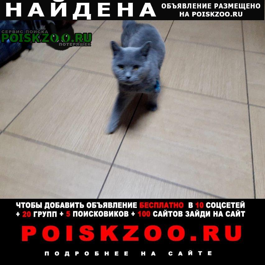 Воскресенск Найдена кошка кот британец(стерилизован)