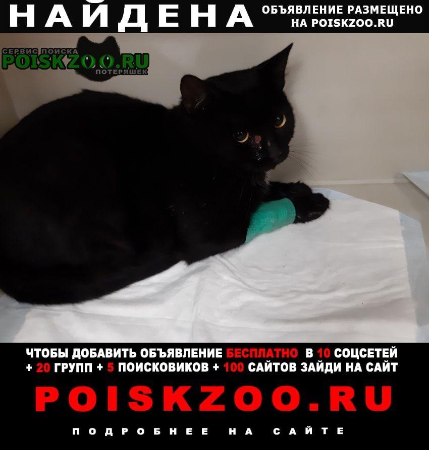 Найдена кошка Самара
