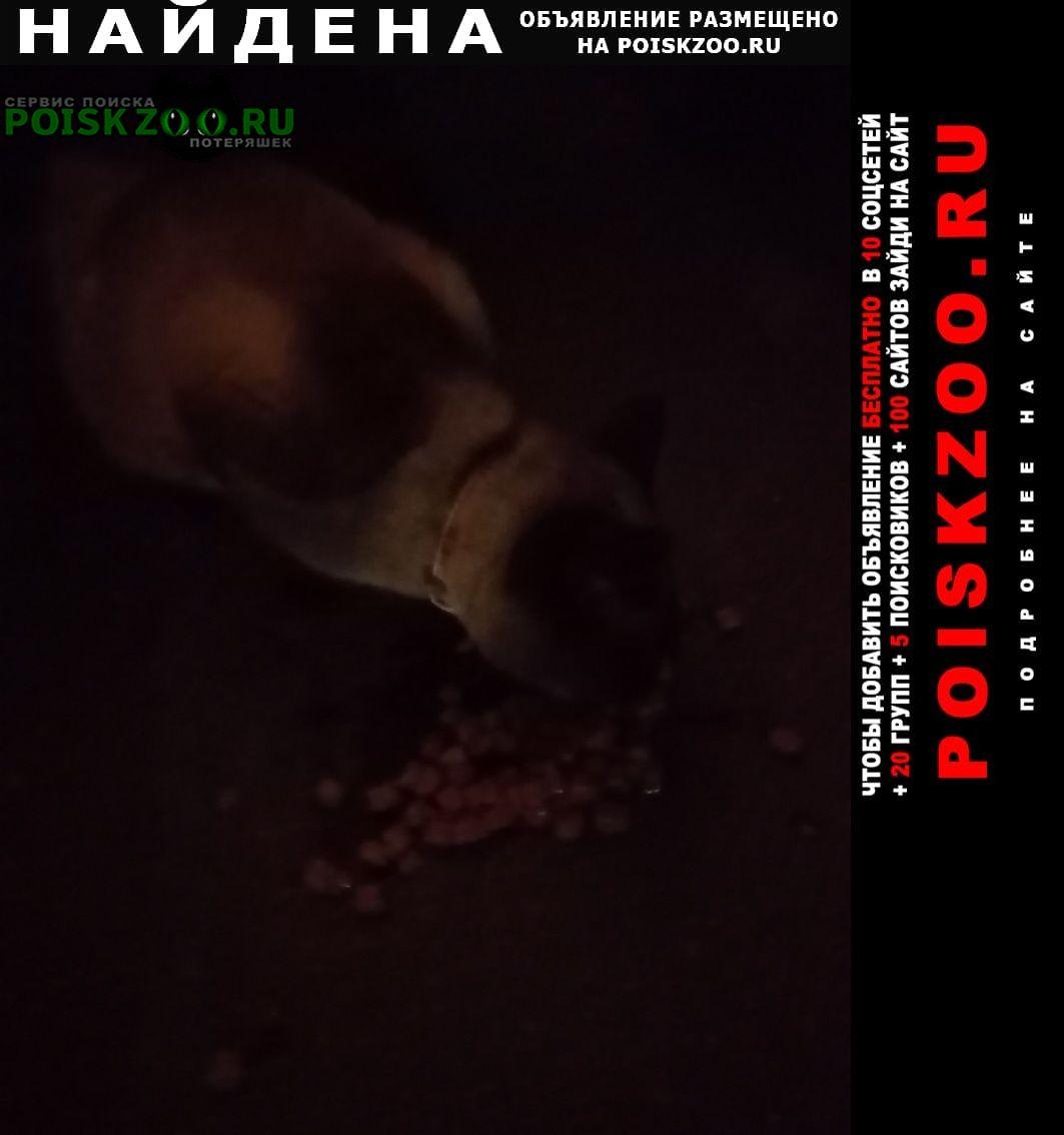 Найдена кошка сиамская кот( ) Видное