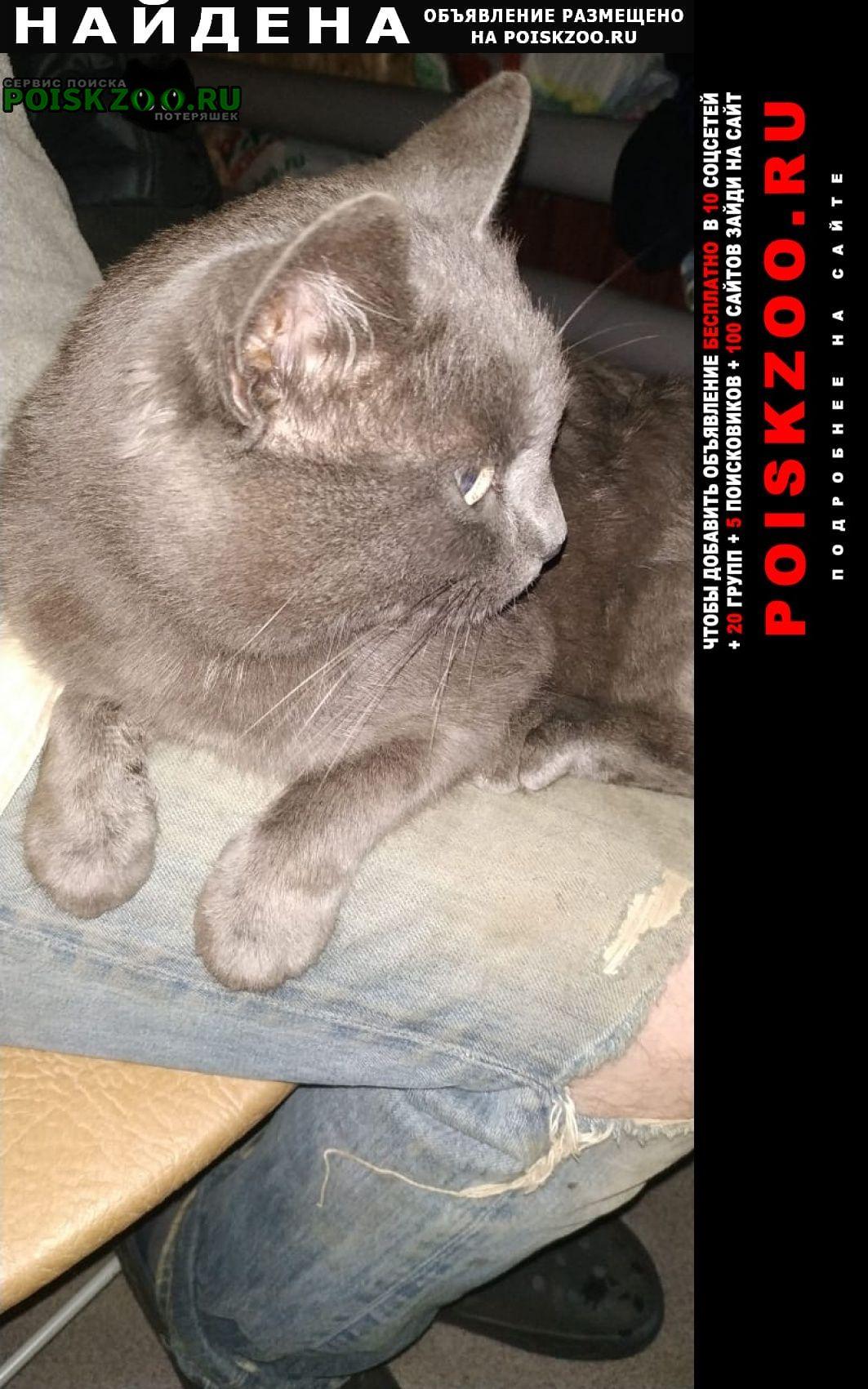 Найдена кошка Зубцов