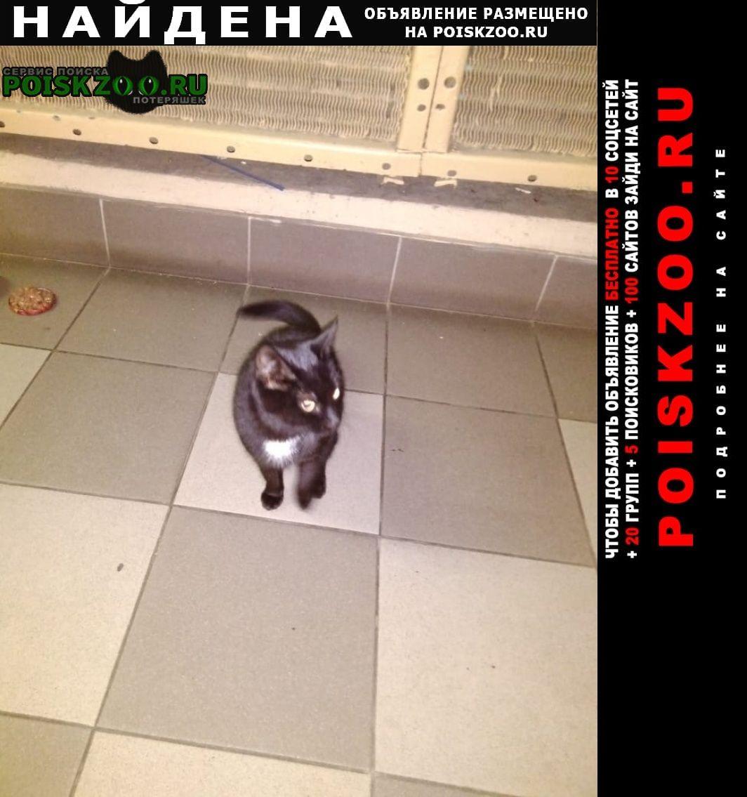 Найдена кошка черная с белым нагрудником Москва