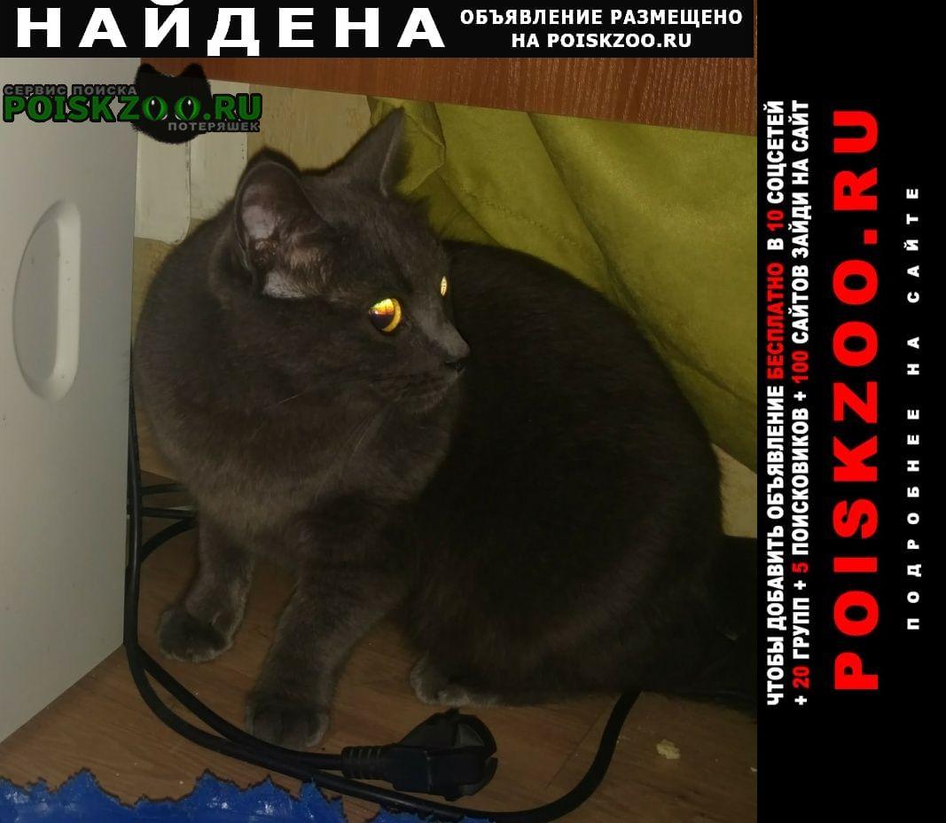 Санкт-Петербург Найдена кошка кот породы британская голубая