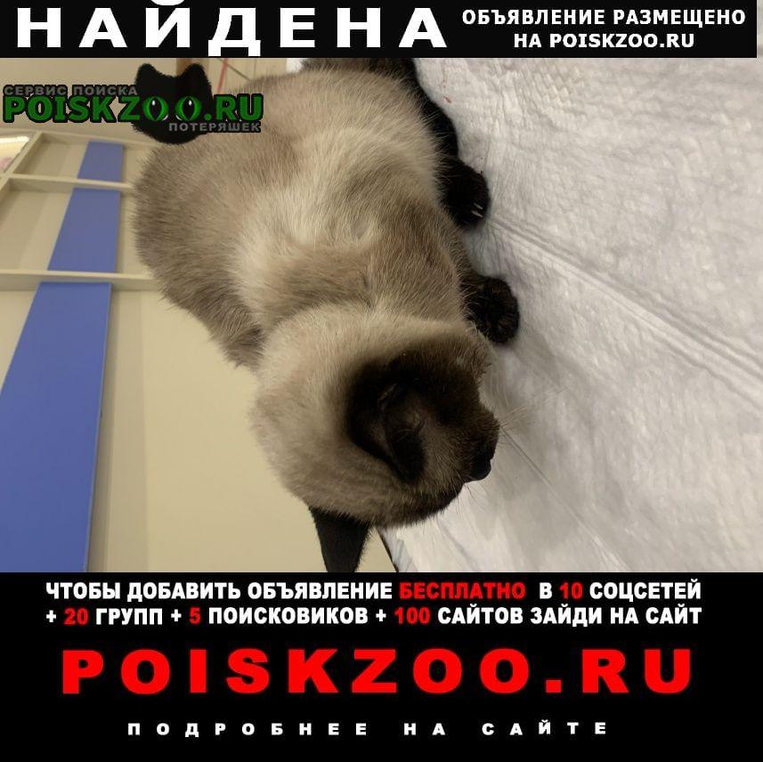 Найдена кошка кот, некастрированный, без чипа Санкт-Петербург