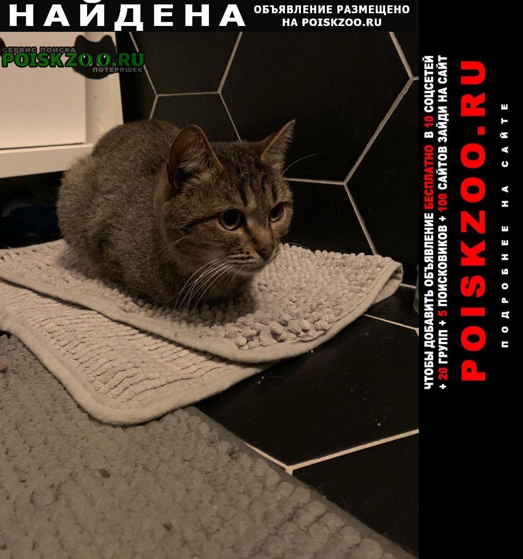 Найдена кошка свао медведково Москва