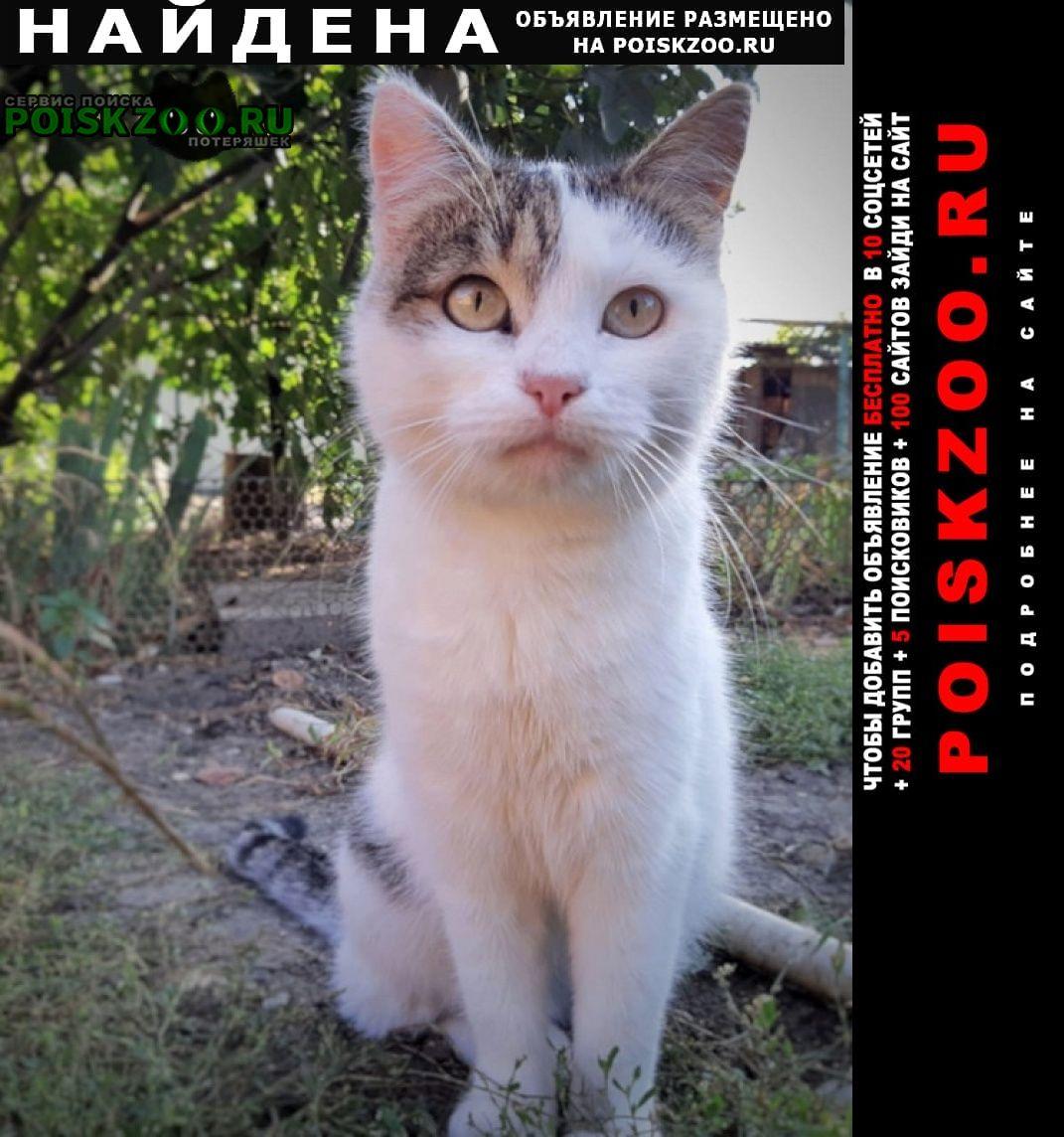 Найдена кошка прелестная, зовут лапка Краснодар