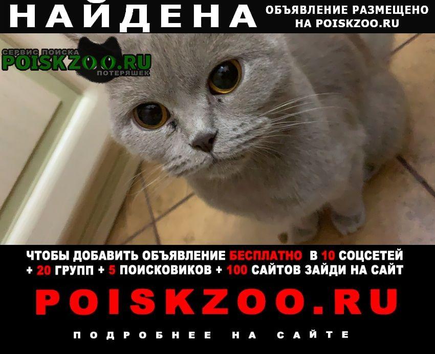 Найдена кошка харьковская улица Москва