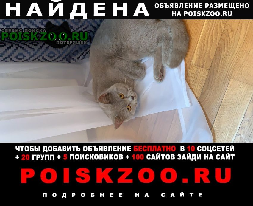 Найдена кошка кот британец серый молодой Москва