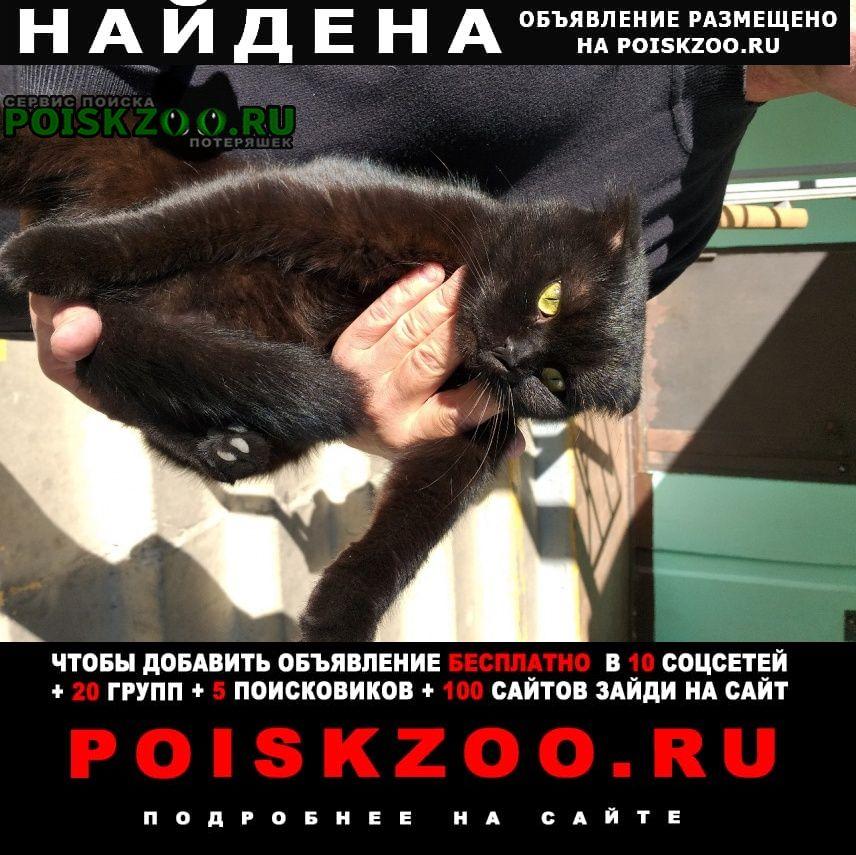 Найдена кошка хозяева заберите меня Краснодар