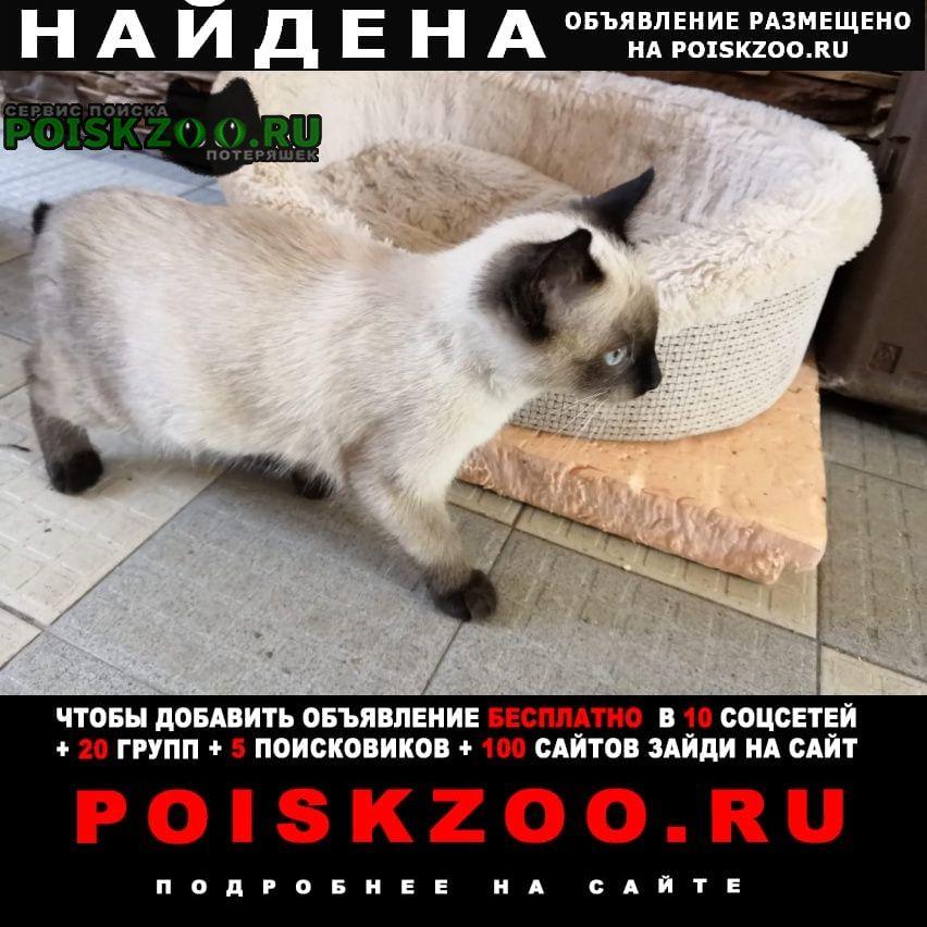 Найдена кошка котенок раменский р-н село новое Раменское