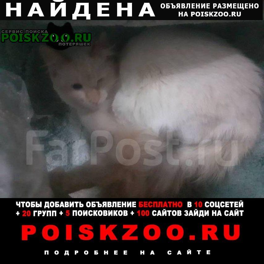 Найдена кошка кот( ) Владивосток
