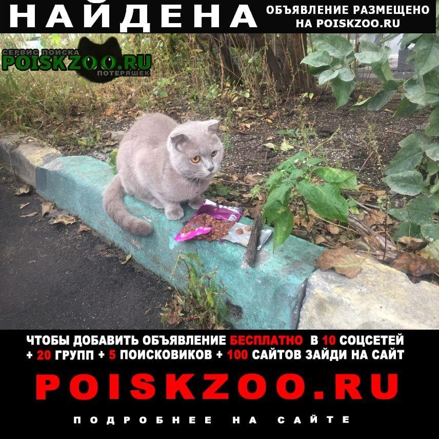 Найдена кошка серая британка с полосатым хвостом Москва
