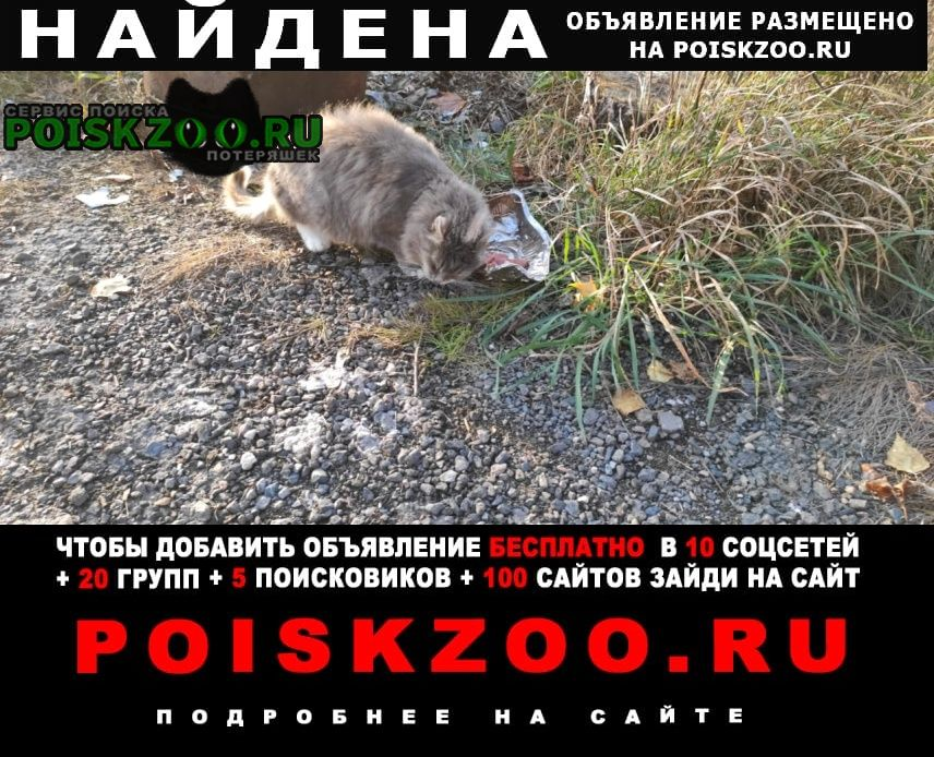 Найдена кошка в пучково Троицк