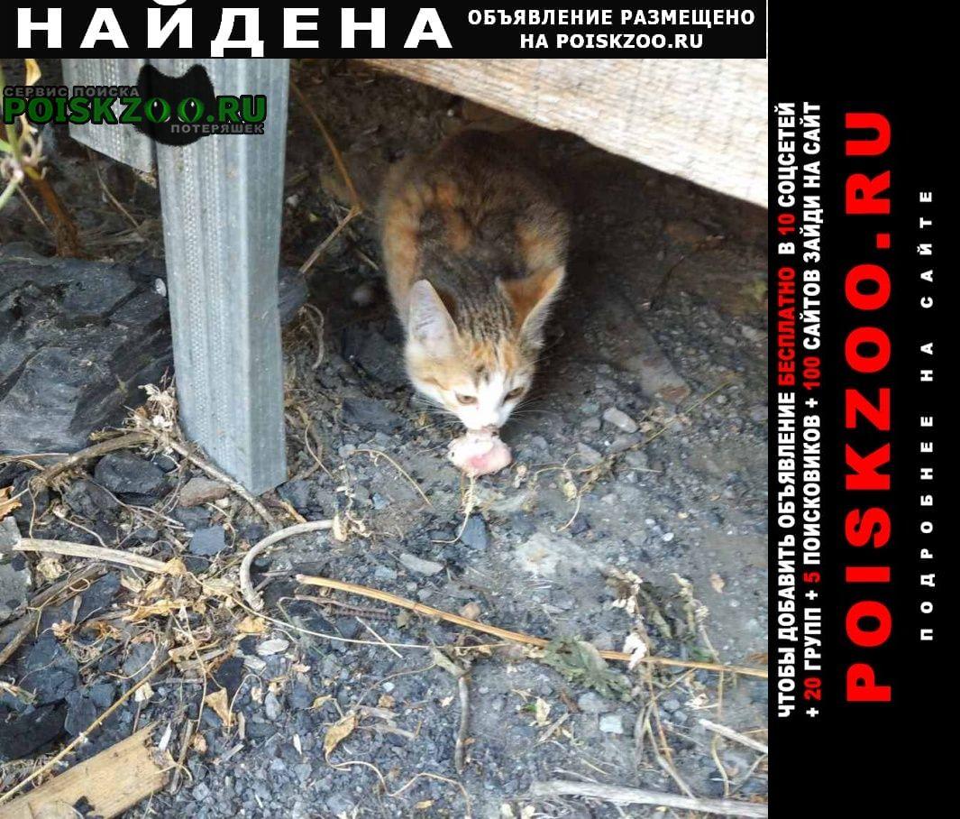 Найдена кошка ищем дом Курган