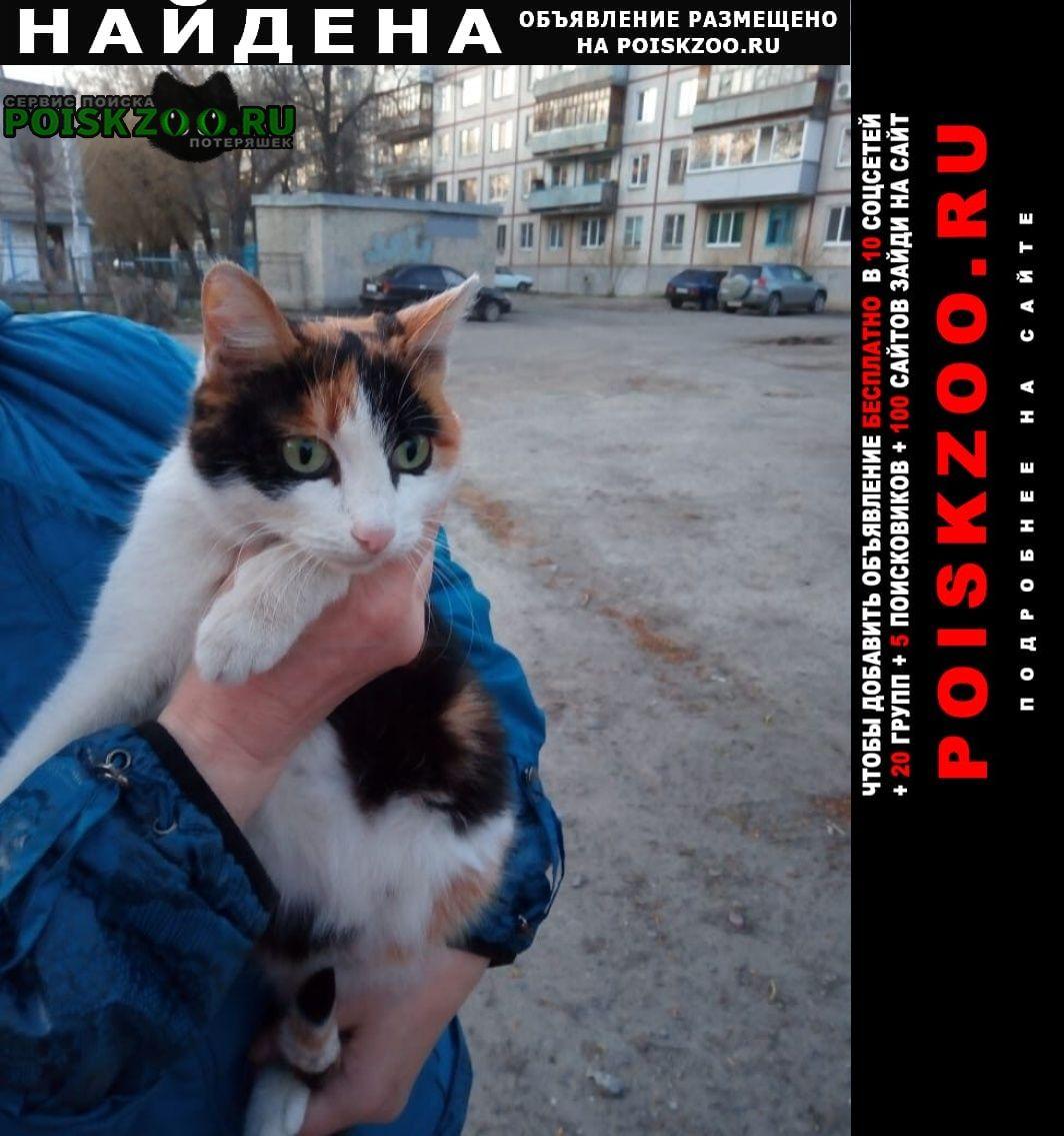 Курган Найдена кошка ищем дом