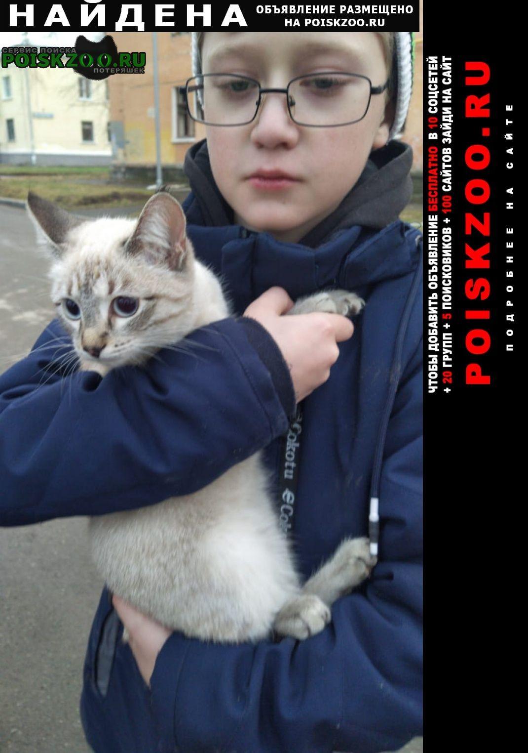 Найдена кошка Екатеринбург