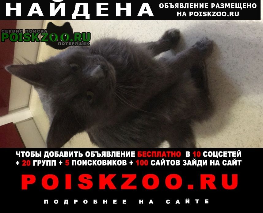 Найдена кошка кот Севастополь