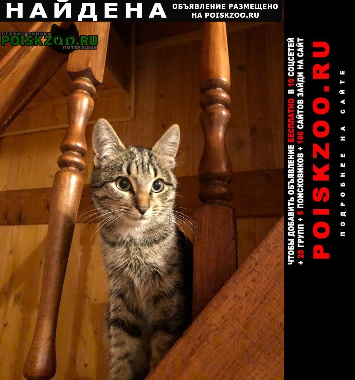 Найдена кошка 13-15 недель Уфа