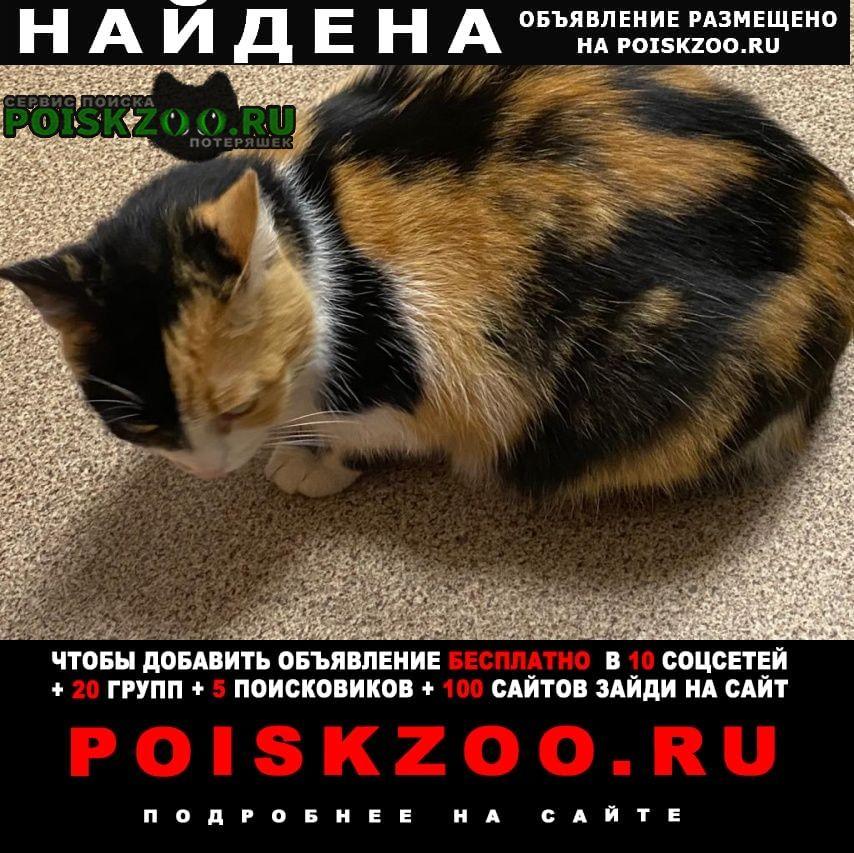 Найдена кошка трехцветная чистенькая, около м.дубровка Москва