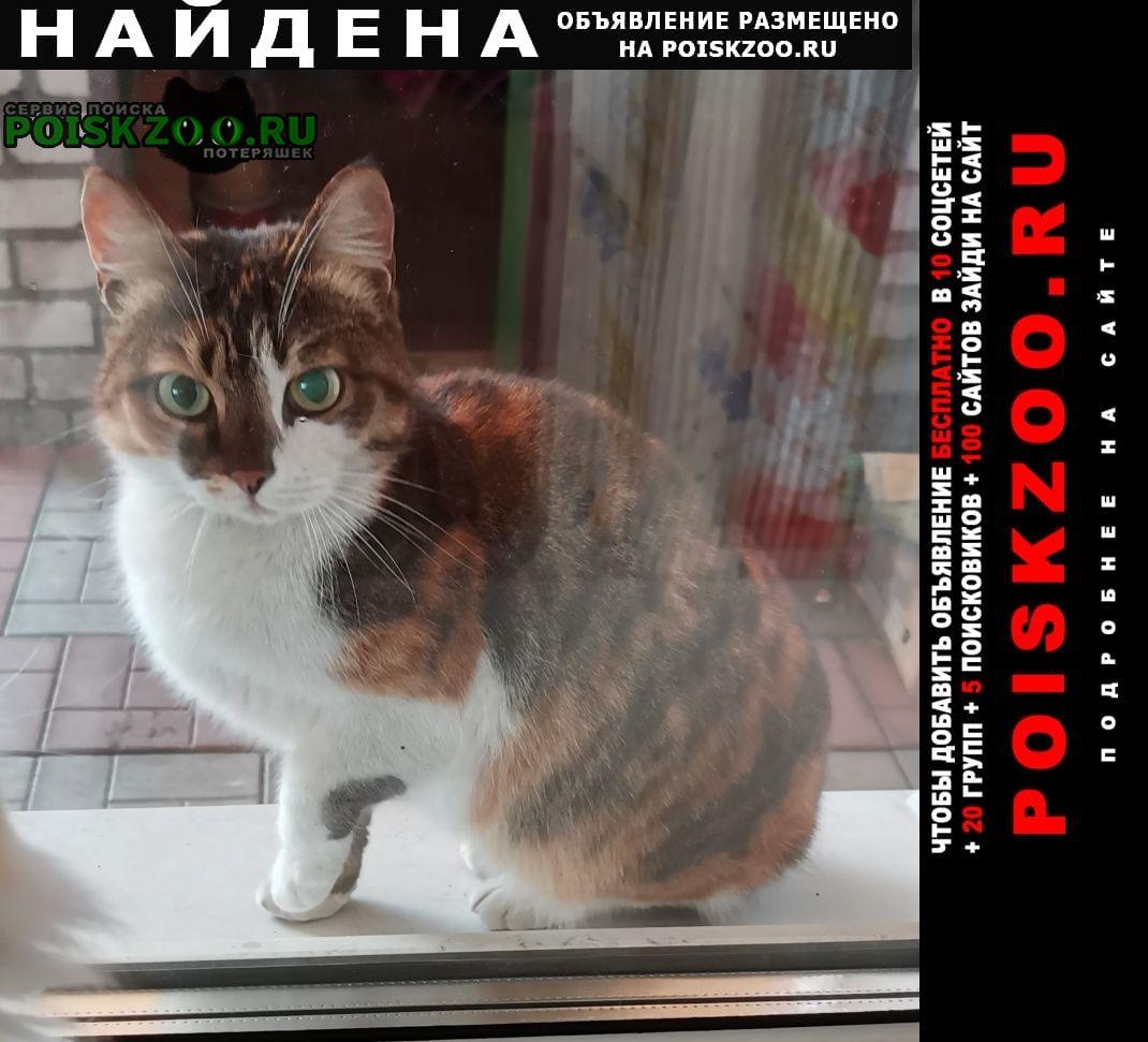 Найдена кошка трехцветная Барнаул