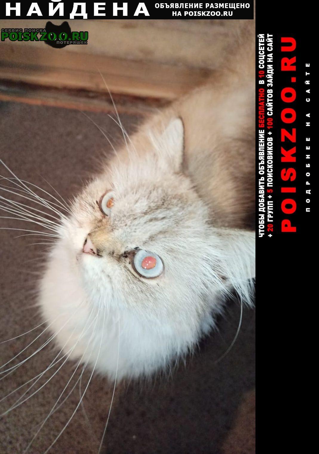 Найдена кошка Ейск
