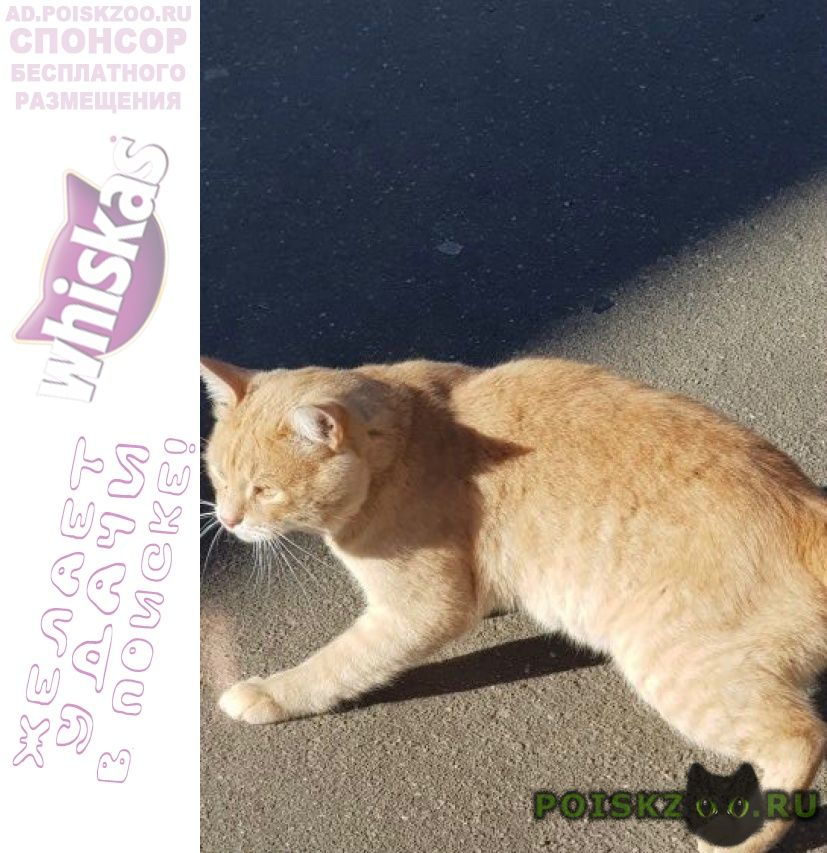 Найден кот в е рыжий г.Подольск