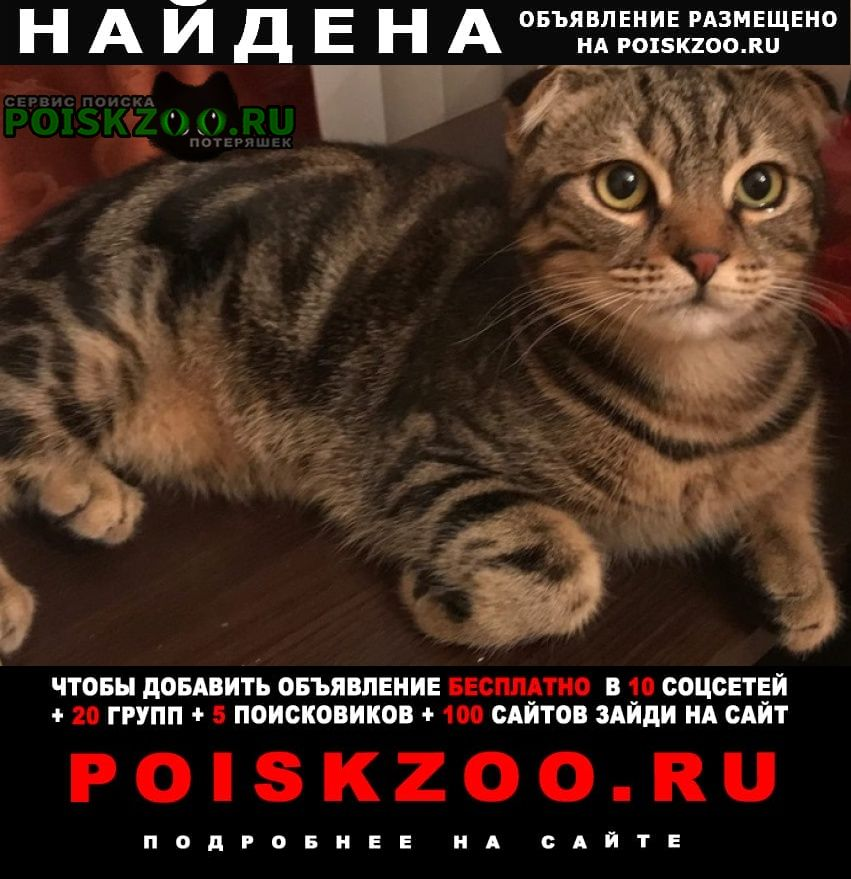 Найдена кошка скоттиш фолд Москва