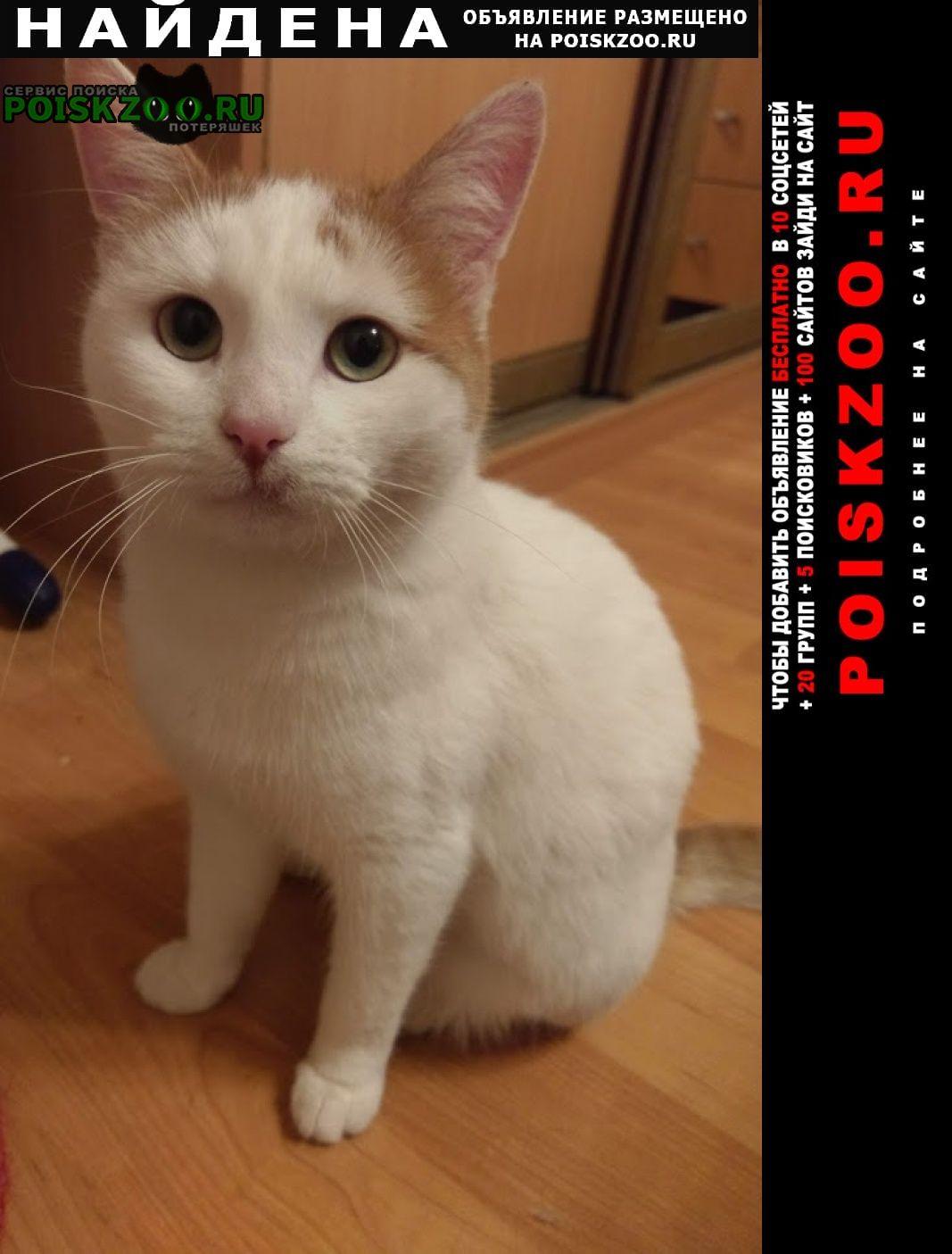 Найдена кошка гольяново Москва