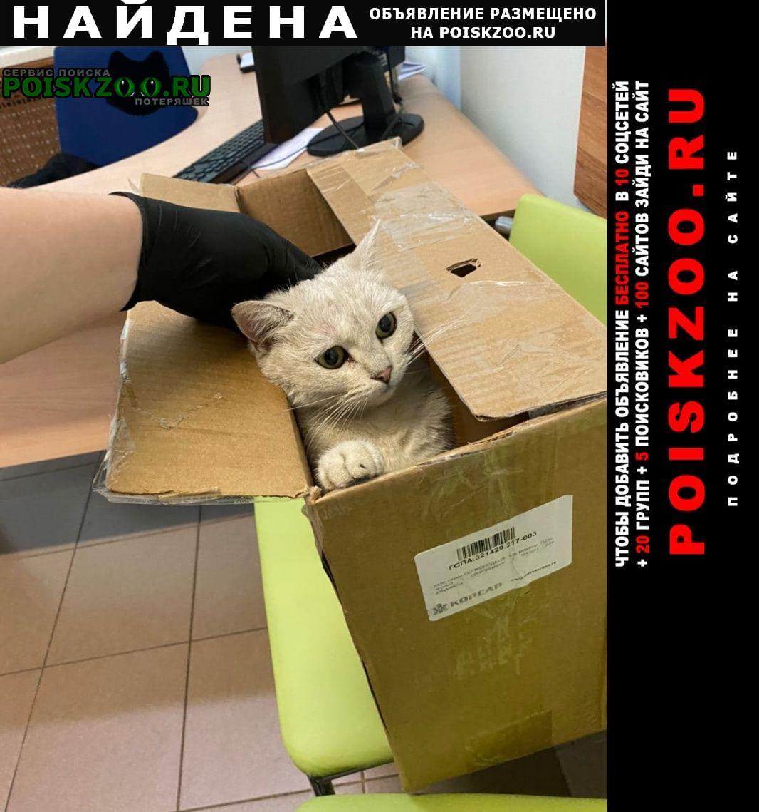 Найдена кошка октябрьское поле, серебристая шиншилла Москва