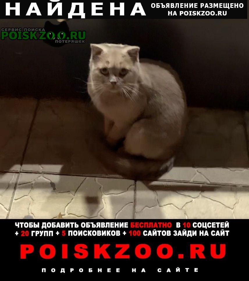 Найдена кошка британка Краснодар