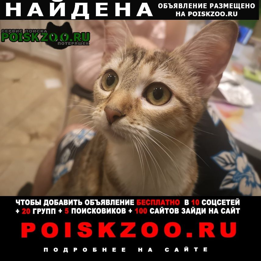 Найдена кошка Щелково