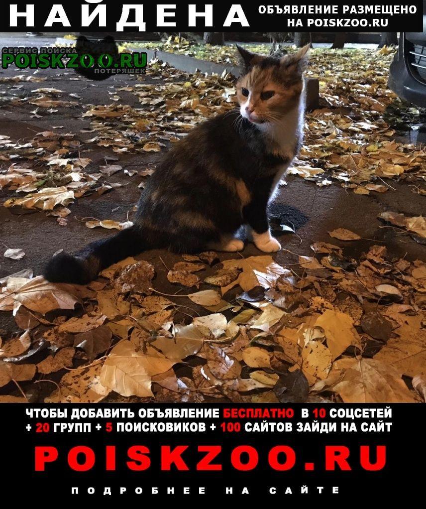 Найдена кошка трехцветная кошечка ищет хозяев Москва