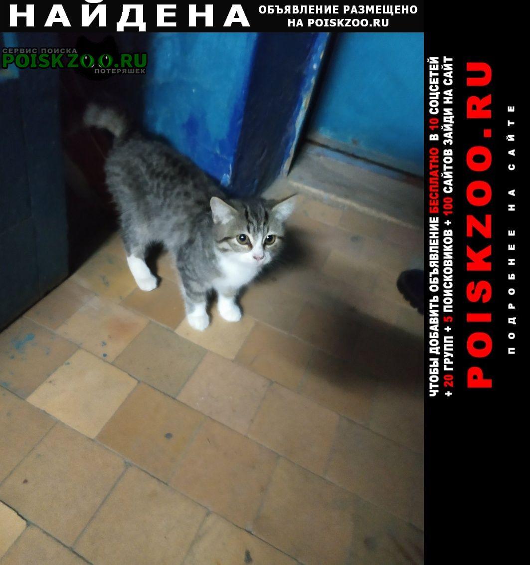 Найдена кошка Балаково