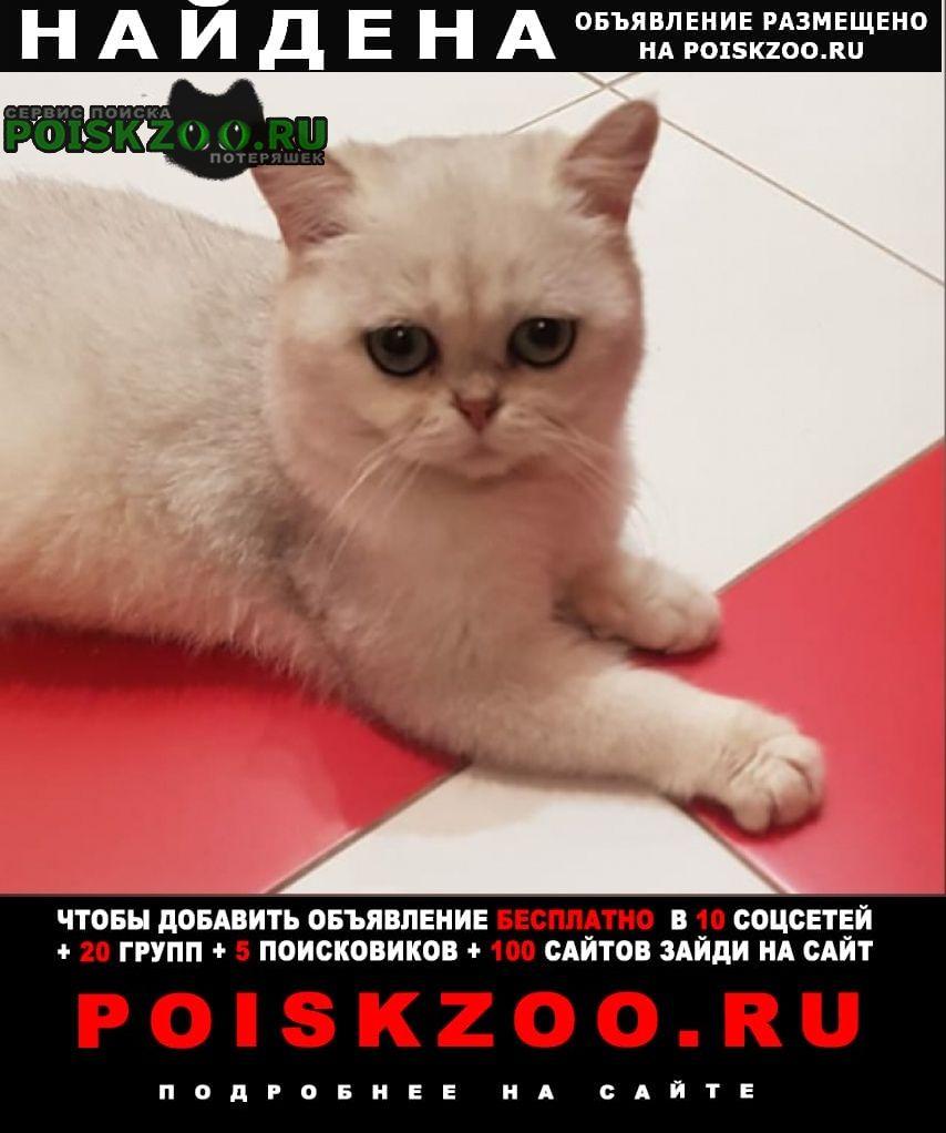 Найдена кошка молодой котик. хозяин, отзовись Боровск