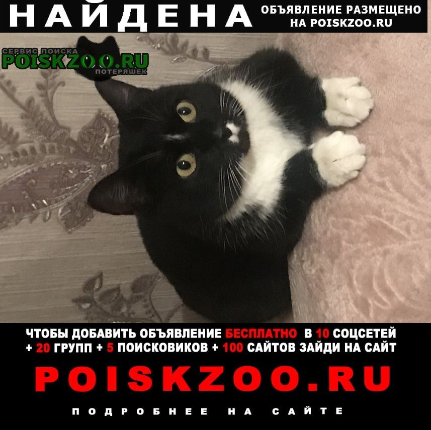 Найдена кошка девочка Нижний Тагил