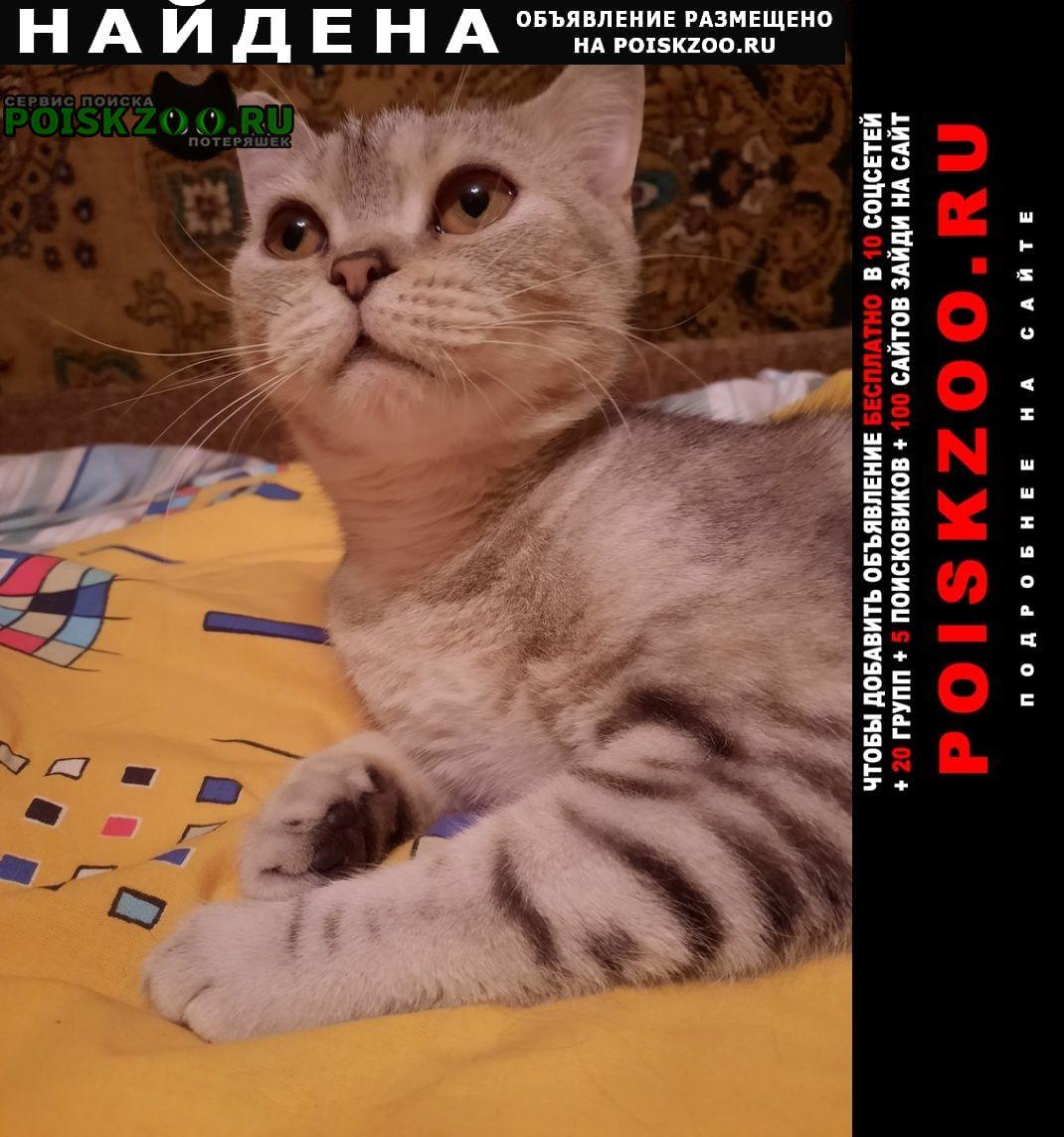 Найдена кошка мраморная породистая Москва