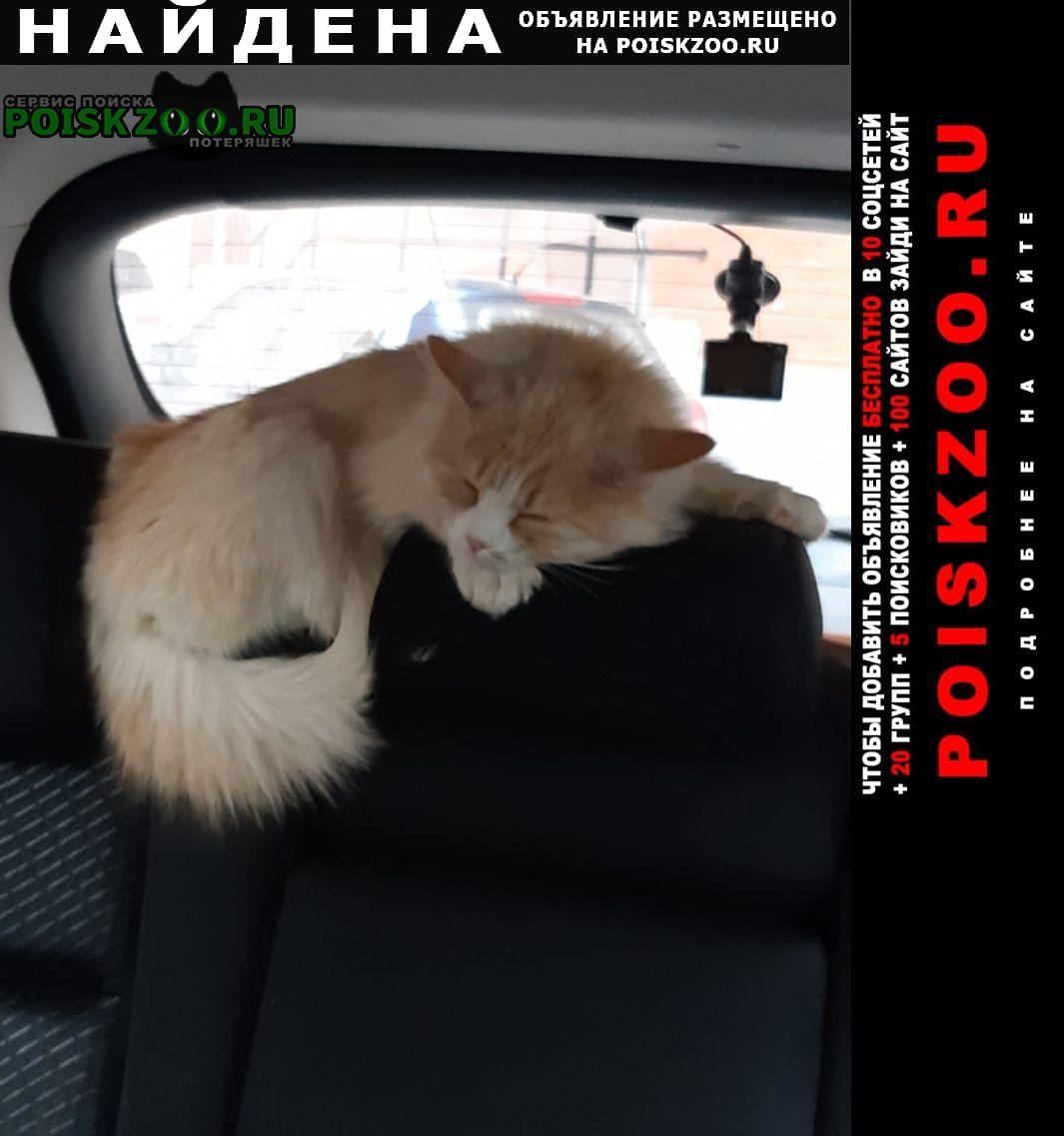 Найдена кошка домашний, 5-месячный, мальчик Рязань