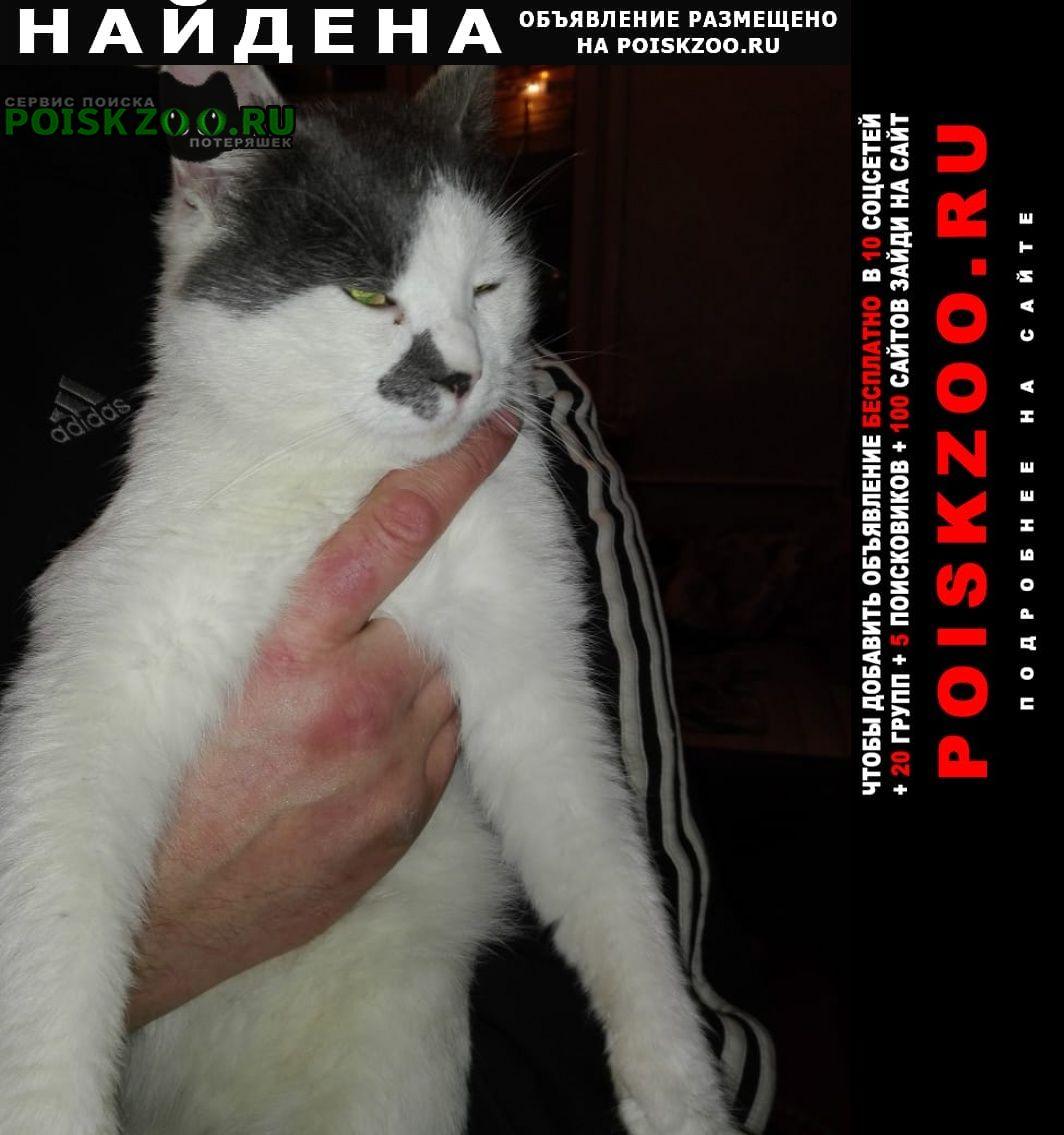 Найдена кошка кот подросток Лобня