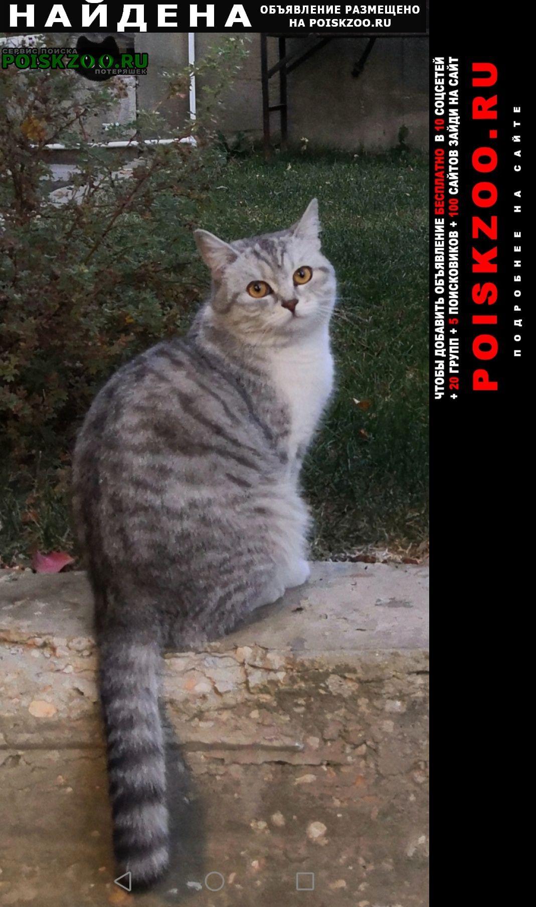 Найдена кошка аврора промышленности Самара